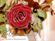 Personalizar tarjetas de amor   ¡Te Amo ...!