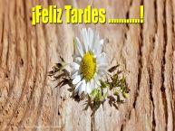 Personalizar tarjetas de buenas tardes | ¡Feliz Tardes ...!